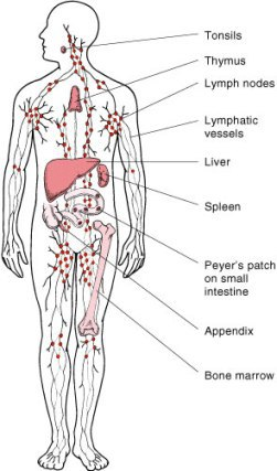 Lymphatic drainage massage in London